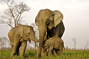Our commitment to elephant welfare