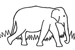 Colour in and name the elephant competition