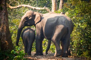 Our new policy on elephant safaris