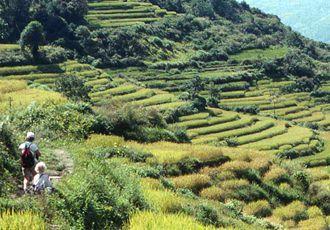 Trekking in yeti territory