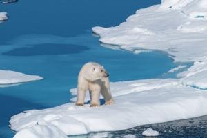 Arctic Polar Cruising Adventure Offer