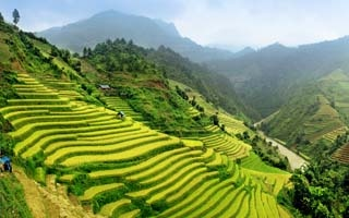 Best time to visit the rice terraces of Sapa and Northern Vietnam