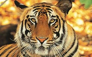 The royal visit to India & Bhutan - Kaziranga National Park