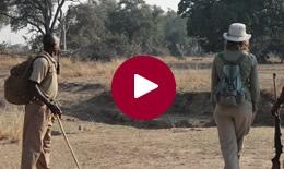 Classic Luangwa Walking Safari in Style, Zambia