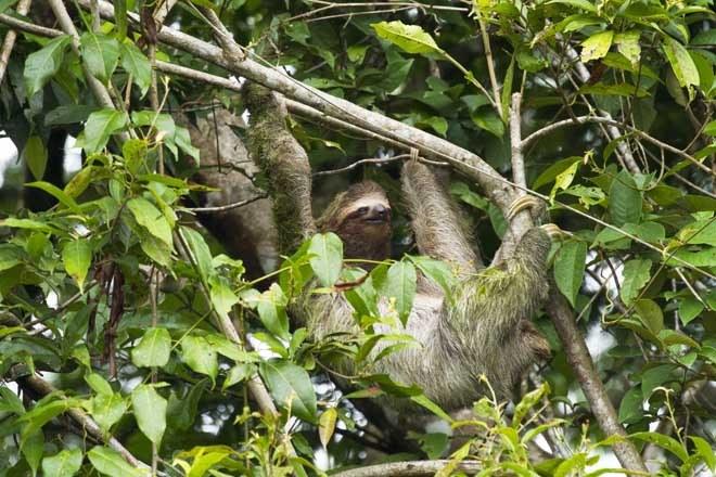 Top Ten Birds & Animals of Costa Rica | Mountain Kingdoms