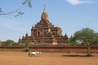 golden trails of burma day 8 bagan temples j deane.
